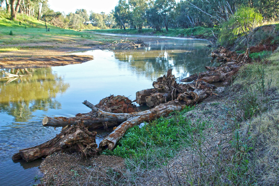 Habitat restoration takes many forms. Here, tree trunks are used to shore up banks whilst providing snags for fish in higher water.
