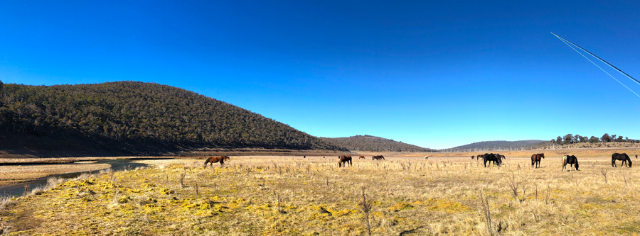 "I found it very peculiar to be tramping so far below the usual waterline at ""Lake"" Eucumbene. The brumbies paid no mind."