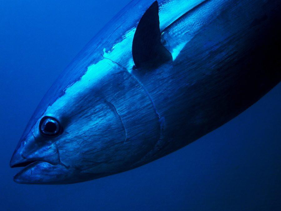 Sharing Australia's Commonwealth fisheries Resources