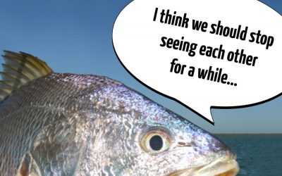 Eastern QLD Black Jewfish OFF LIMITS for 2020