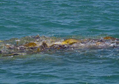 DARWIN LAND-BASED FISHING: PT 2 — NT