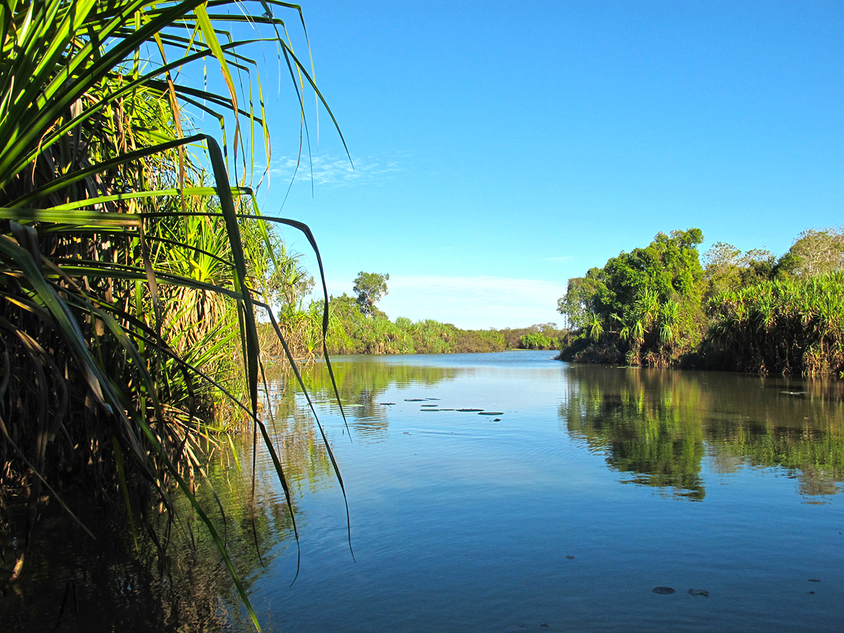 A serene arm of Corroboree Billabong, overhung with pandanus and hemmed with dense lily beds.