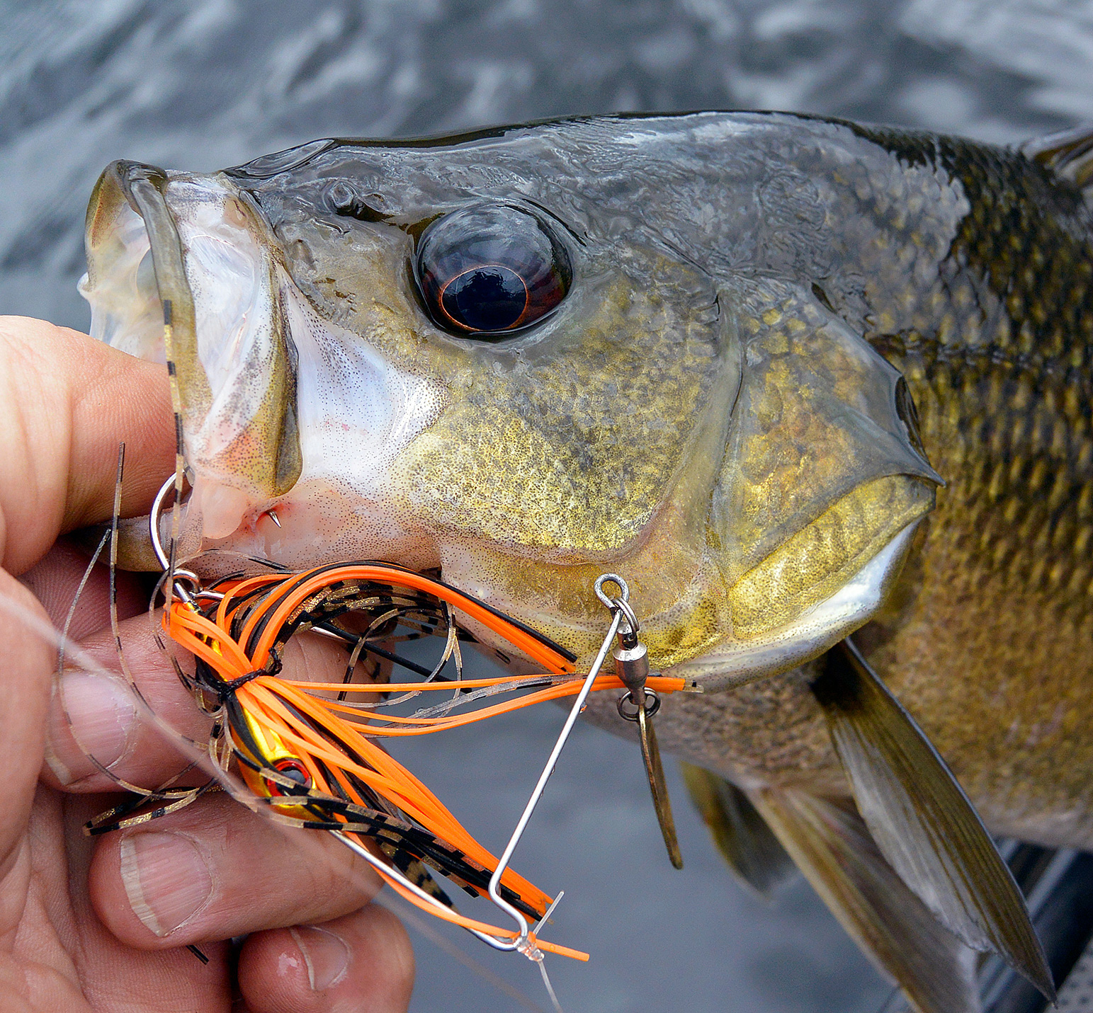 Spinnerbaits work as well on the bass in Brogo as they do most places.
